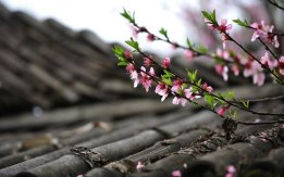 Flowers above the Roof