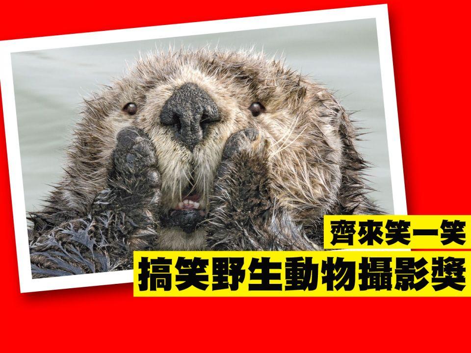 Comedy Wildlife Photo Awards 搞笑野生動物攝影獎 齊來笑一笑! 加拿大中文電臺 AM1470 FM96.1