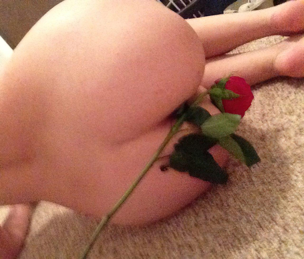 Rosa Vermelha (9)