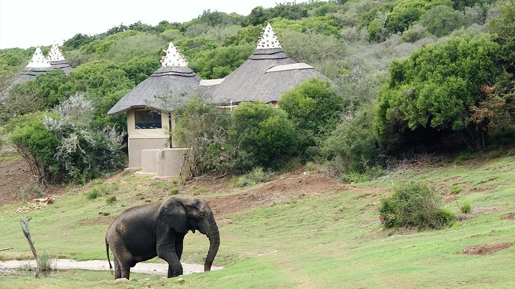 Safari Lodge Elephant Water Hole