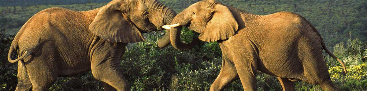 Amakhala   5 Star Accommodation   Elephants