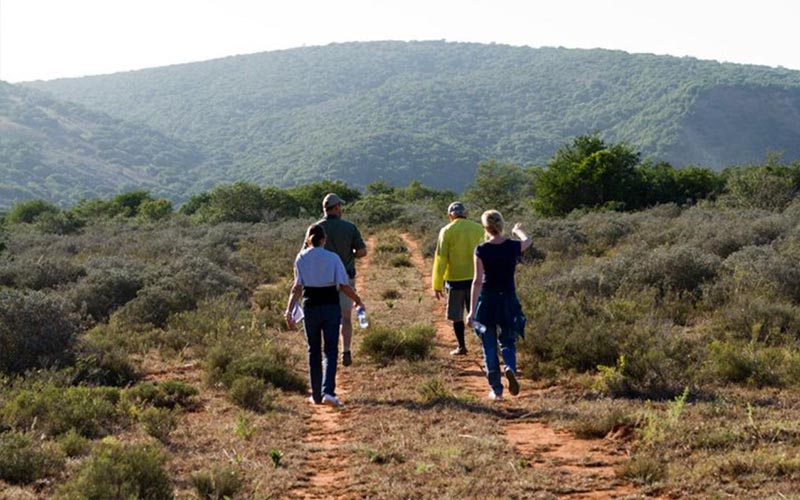 Amakhala   Activities   Guided Walks   Following the Trail