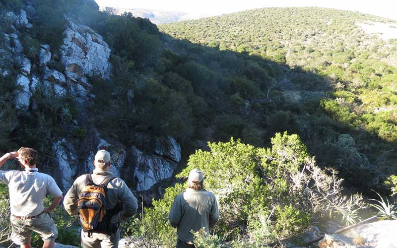 Amakhala   Activities   Guided Walks   View