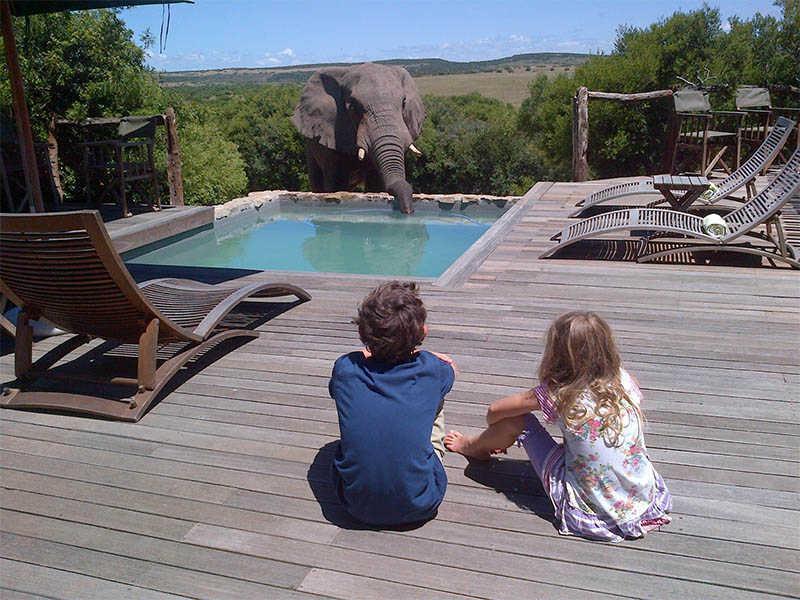 Hillsnek Safari   Activities   Elephants Drinking by the pool