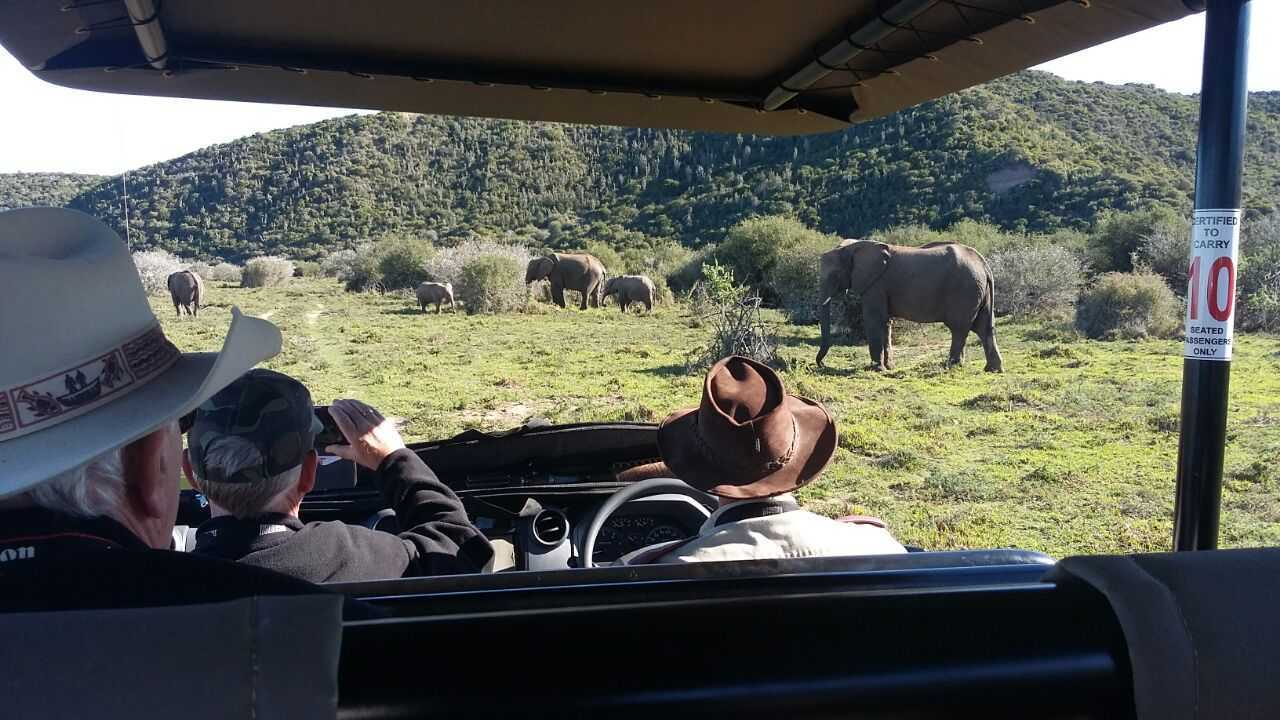 Amakhala Woodbury Tented Camp Activities Game Drive Day Safari