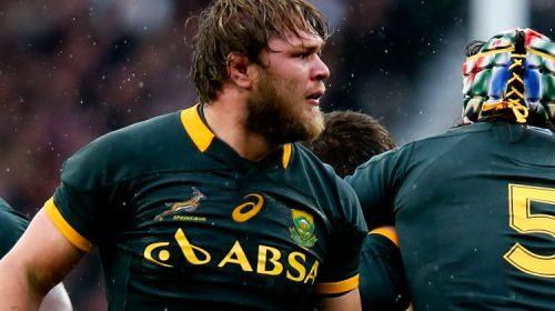logo-springbok-maglia-sudafrica