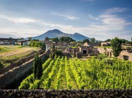"""Vesuvius and the Vineyards, Pompeii"""