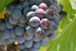wine-tasting-naples_04