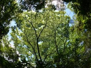 ハゼノキの木陰