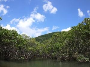マングローブ水路