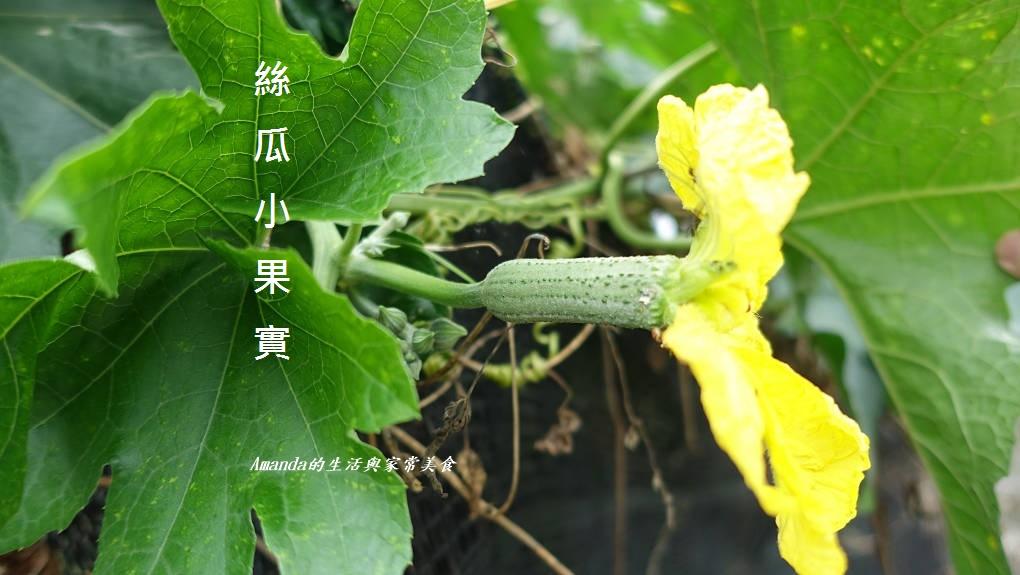 食材小知識-認識蔬菜-烹調方式