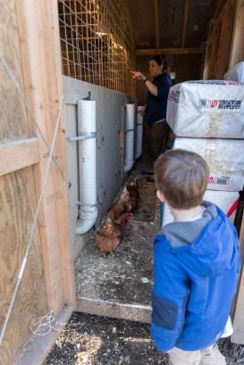 Mother Hen Farm 1