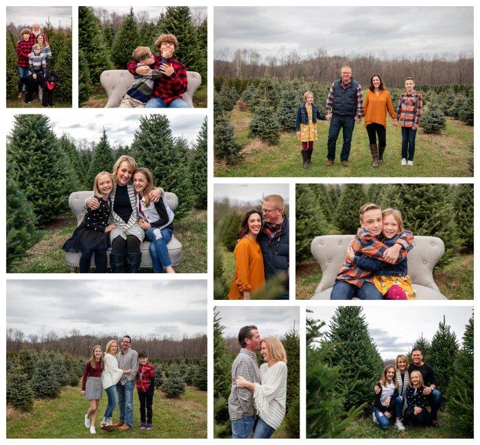 Sugar Pines Tree Farm Sneak Peak