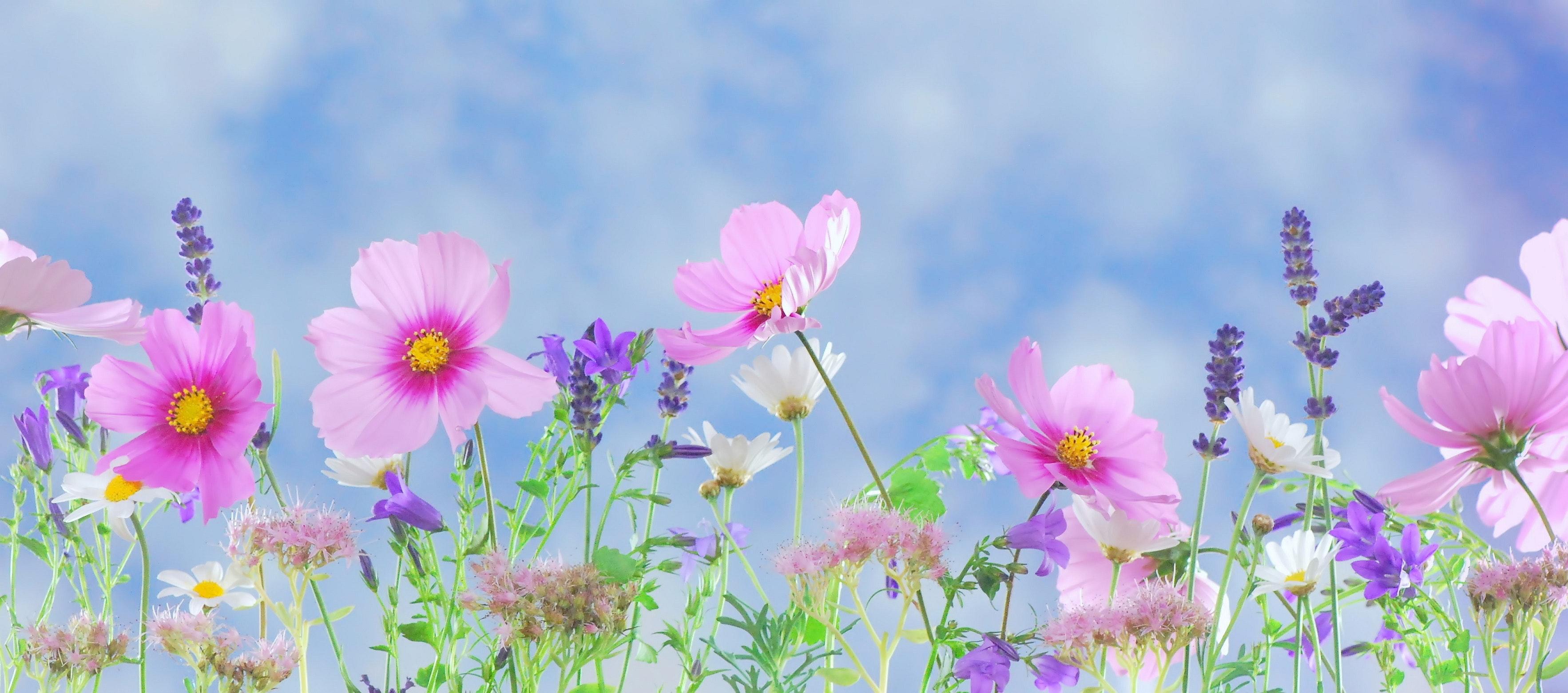 blossom flora