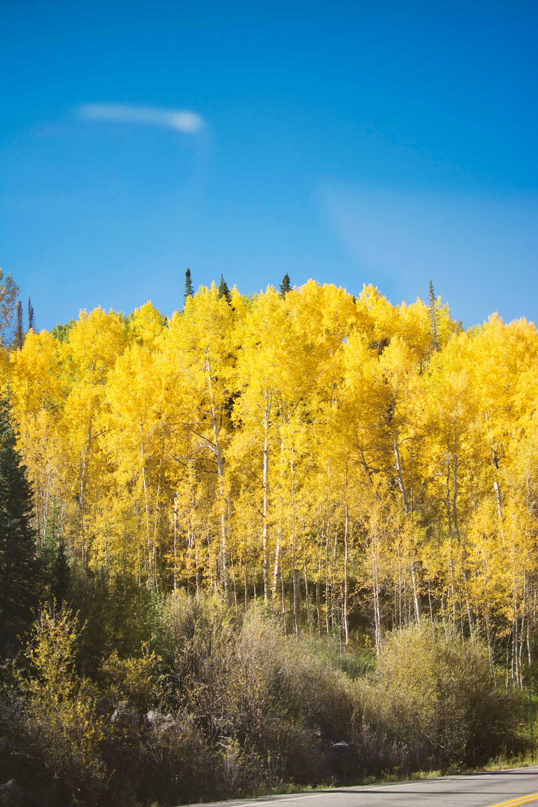 Grand Mesa Autumn | amanda.matilda.photography Grand Junction Photographer