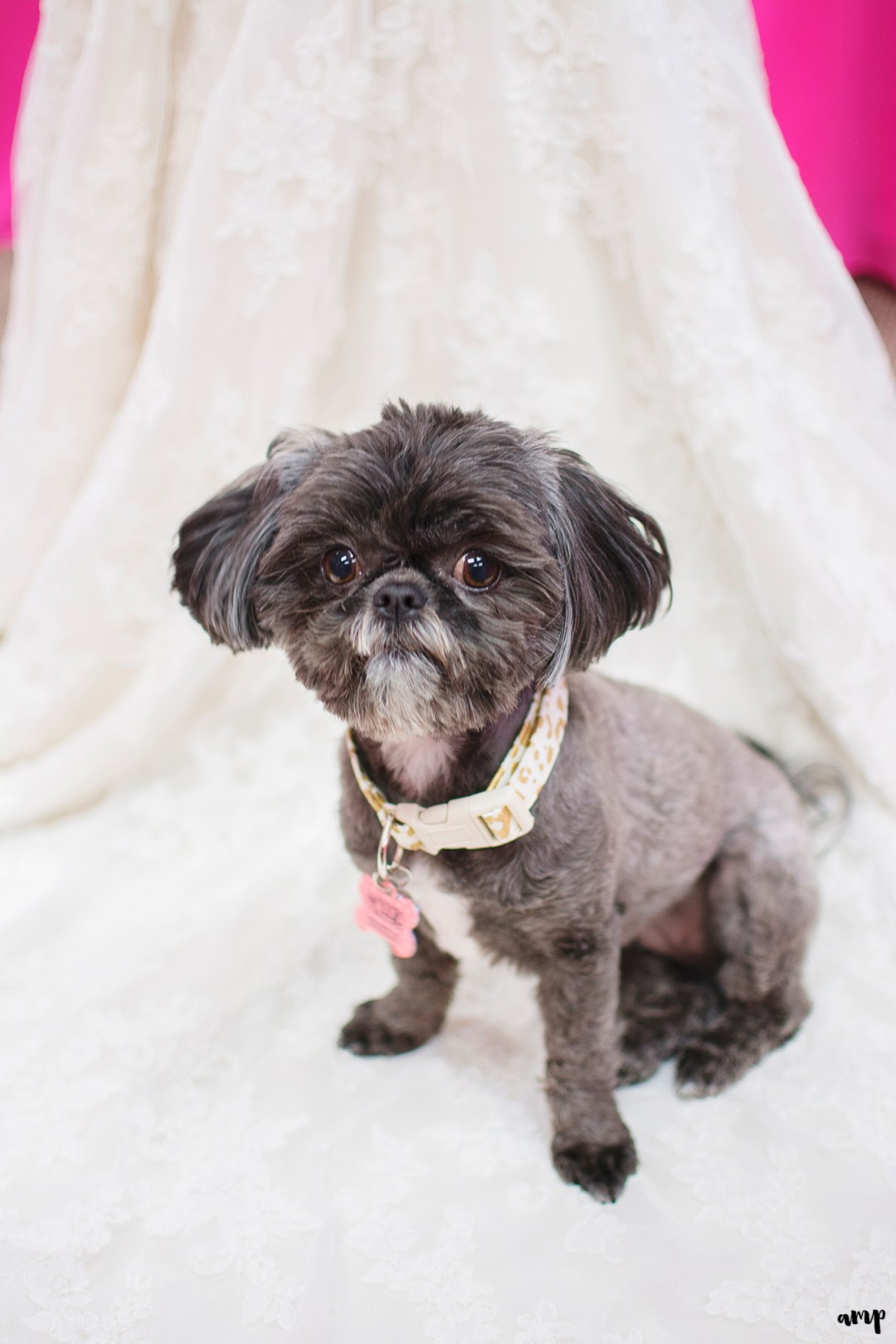 Bride & groom's puppy on wedding dress