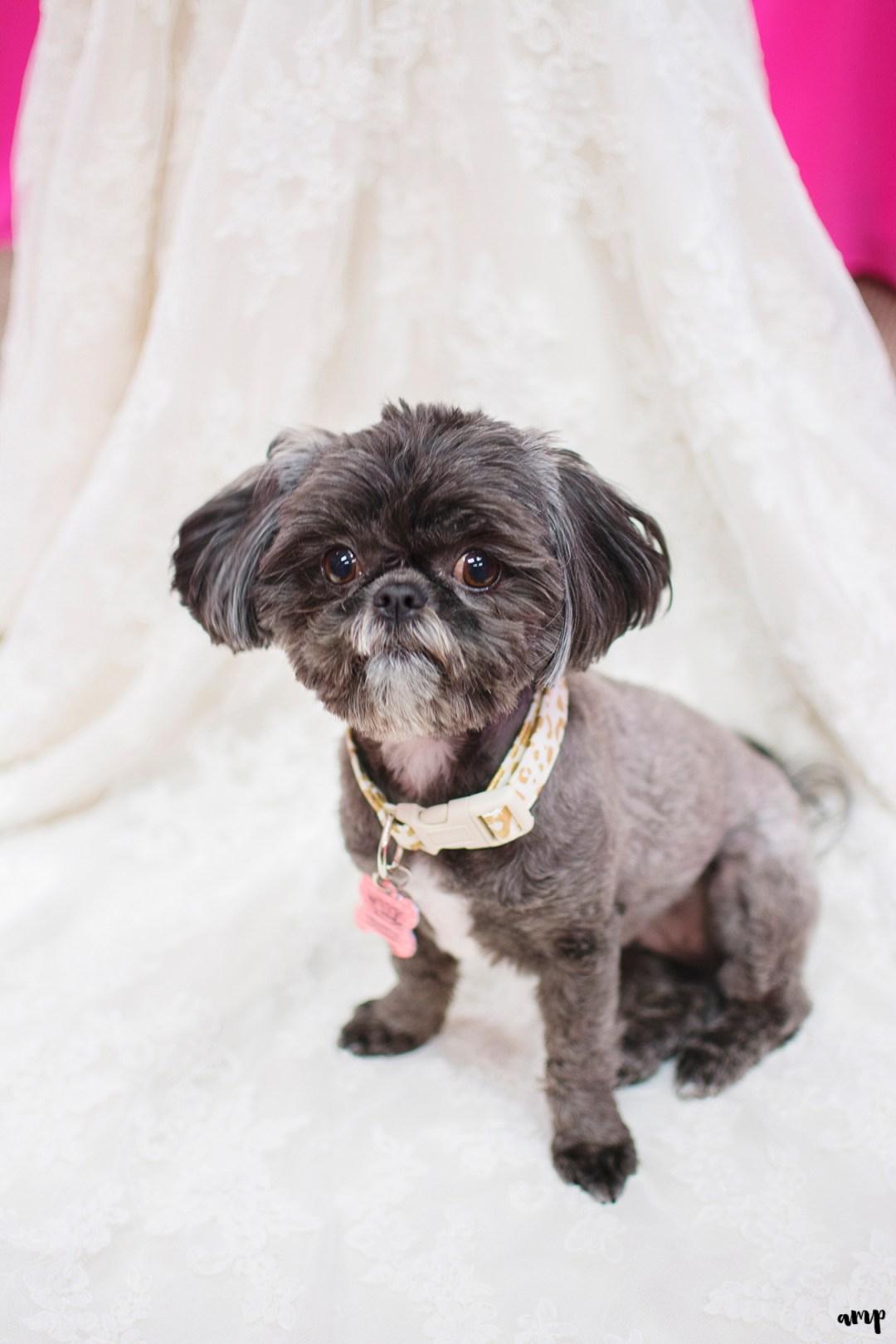 Bride & groom's puppy on wedding dress