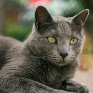 Spaz - Amanda's cat