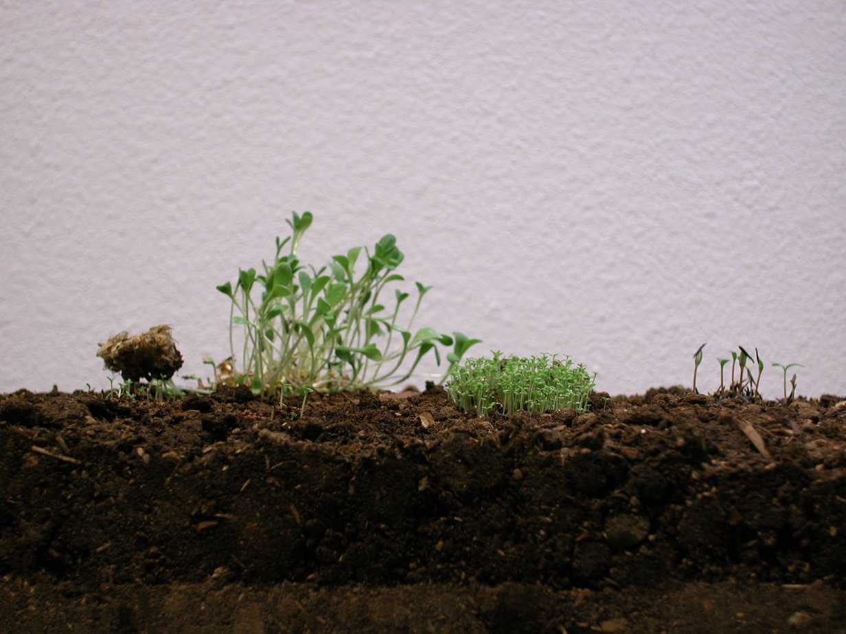 Sprouts on rammed earth.