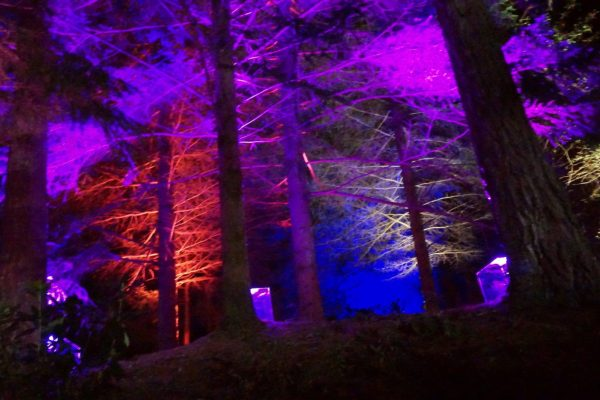 Enchanted Forest multicolor lights