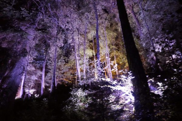 Enchanted Forest trees lit up