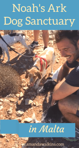 You can walk any of the shelter dogs at Noah's Ark Dog Sanctuary in Malta every morning of the week. Go spend some time with some loving pups while on vacation!
