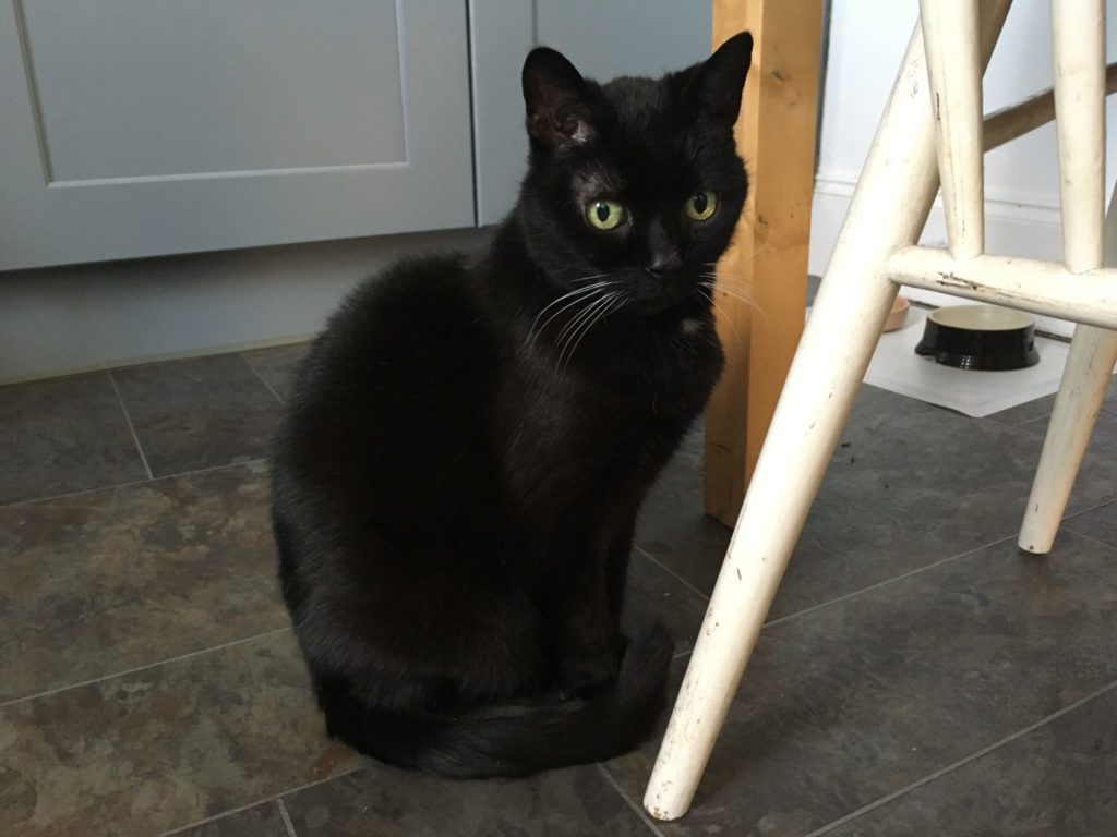 Missy, a black cat with green eyes, sitting on the floor beside a chair during catsitting.