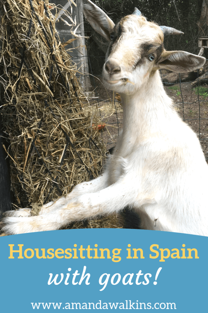 Longterm housesitting in Spain: Our 3 months in Asturias on a smallholding with goats, chickens, and a kitten