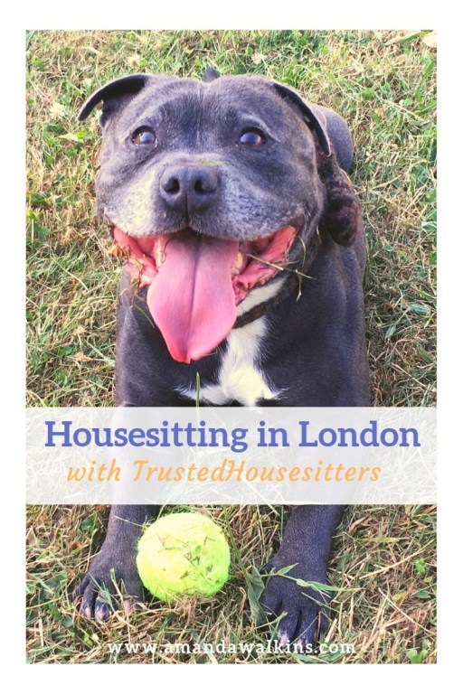 Amanda Walkins is an experienced house and pet sitter with TrustedHousesitters. Read more about her housesitting gigs in London, England!