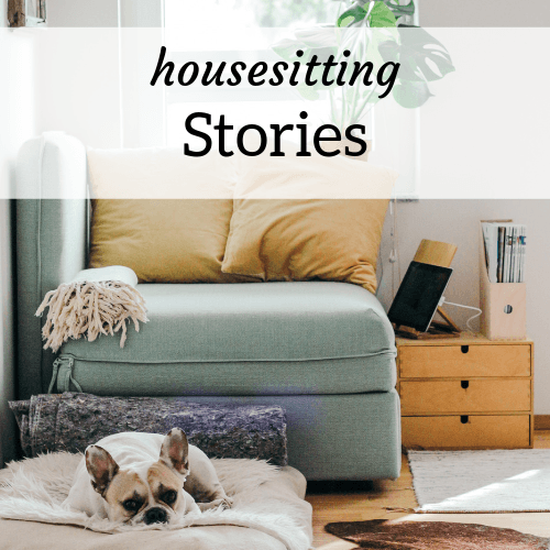 "Dog lying on the floor of a modern apartment; Text overlay reads ""Housesitting Stories"""