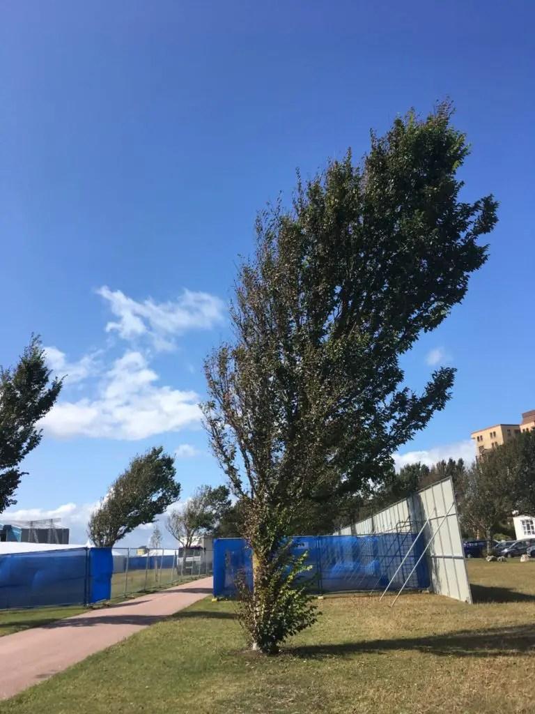 trees being blown sideways