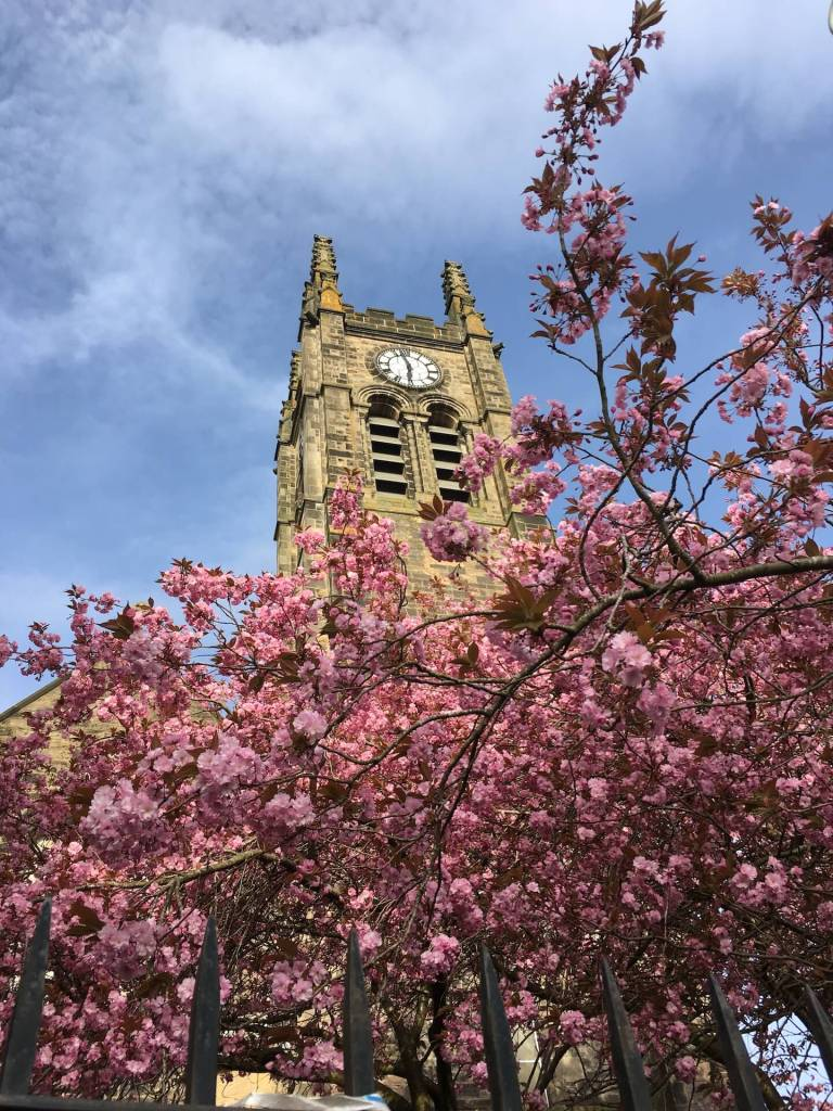 A square church belltower rises above a cherry blossom tree in full pink bloom