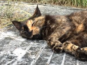 s_cat
