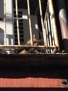 hardboiled_cat