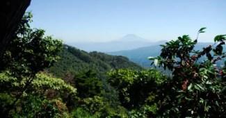 Producción de café ecológico para cuidar el medio ambiente