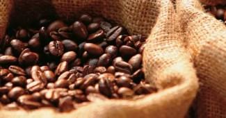 producción de café mexicano