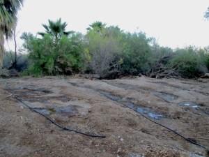 marsh irrigation 1