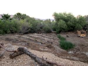 marsh irrigation 2