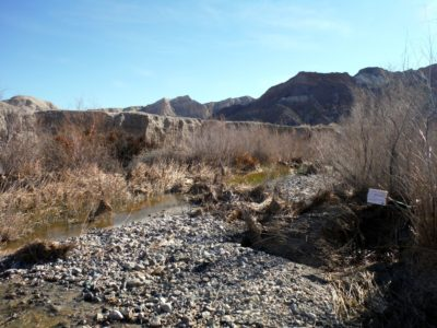 Before tamarisk removal along the Amargosa River near the Slot Canyon