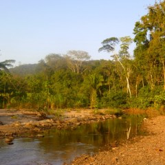 Chonta rio