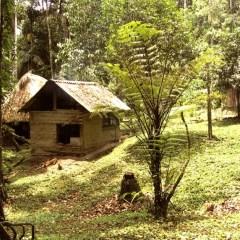 (Français) La Chonta : au coeur de l'Amboró