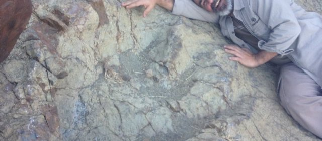 Record-breaking dinosaur footprint discovered in South America