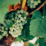Vinho Verde: Complete Guide to a Portuguese Wine You Should Be Drinking