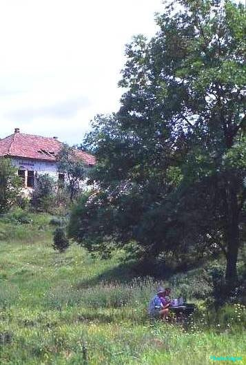 A derelict house overlooks a fig tree where we take a picnic near the border