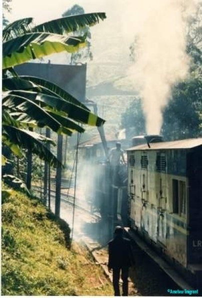Clouds of steam issue from a train preparing to depart. Banana leaves overhang the track