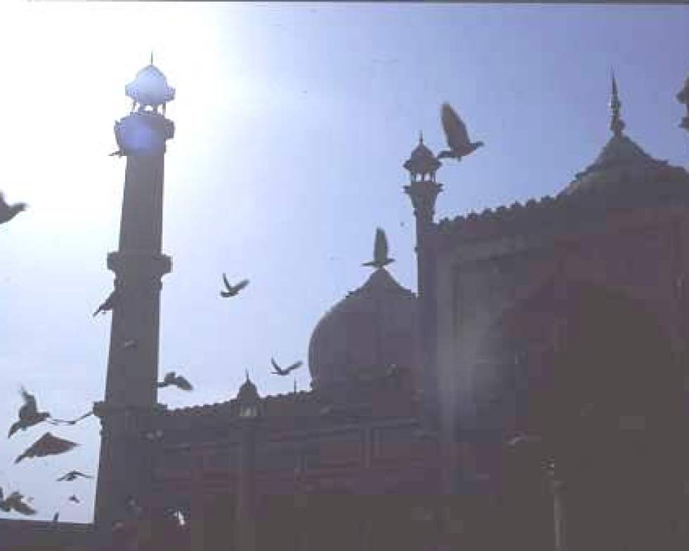 Pigeons aloft, Jami Masjid, Old Delhi