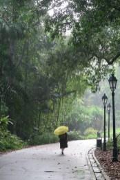 07-botanic-gardens-rain-singapore