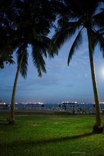 15-east-coast-park-palms