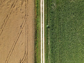 A birds eye view of two fields divided by a road. One side is wheat the other grass so we have yellow and green sides.