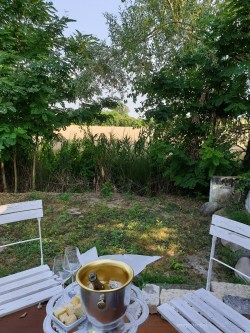 Our backyard at the B&B overlooking trees and a large field of wheat.